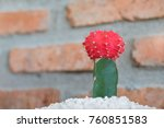 cactus cactus in a potted plant ... | Shutterstock . vector #760851583