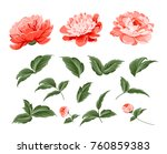 set of peony flowers elements.... | Shutterstock .eps vector #760859383