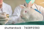 Stock photo the closeup of a white rabbit in the laboratory with doctor in uniform with stethoscope and going 760893583