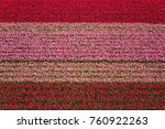 tulip field nature abstract... | Shutterstock . vector #760922263