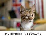 funny cat at  office | Shutterstock . vector #761301043