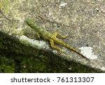 camouflage tropical lizard  | Shutterstock . vector #761313307