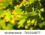 detail of green aand yellow... | Shutterstock . vector #761316877