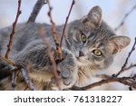Stock photo gray cat on tree branches 761318227