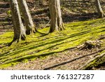 view of the clearing with moss  ... | Shutterstock . vector #761327287