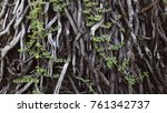 background of tree branches and ... | Shutterstock . vector #761342737