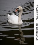 Small photo of Swan on the river. Swan on the water.