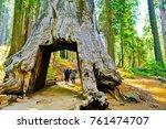 Yosemite National Park  Usa ...