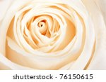 Background Of White Roses Clos...