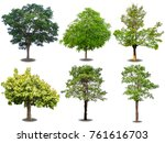 isolated of mix trees with... | Shutterstock . vector #761616703