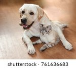 Stock photo a cat and a dog jostle and love each other cute hugs 761636683