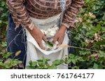 cotton harvesting. a woman... | Shutterstock . vector #761764177
