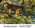 Image Of Monkey Baboons Near...