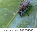 fly insect macro close up | Shutterstock . vector #761938843