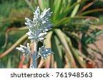 Plakkie Flower Buds