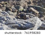 crab near to the beach | Shutterstock . vector #761958283