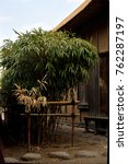 """Small photo of Arrow bamboo - Pseudosasa japonica. It is called """"Yadake"""" in Japan."""