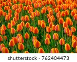 flowerbed with yellow and red... | Shutterstock . vector #762404473