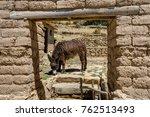 donkey eating  la isla del sol... | Shutterstock . vector #762513493