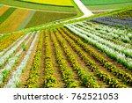 flower fields in hokkaido  japan | Shutterstock . vector #762521053