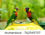 rainbow lorikeet bird taking a... | Shutterstock . vector #762545737
