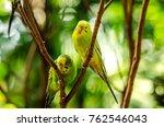 beautiful budgerigar bird... | Shutterstock . vector #762546043