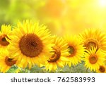 bright yellow sunflowers on... | Shutterstock . vector #762583993