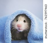 a cute fluffy hamster looks out ... | Shutterstock . vector #762597463