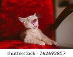 Stock photo the kitten is sitting on the red chair the kitten woke up 762692857