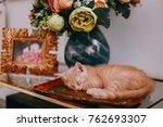 Stock photo the kitten is asleep 762693307