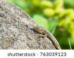 lizard on a rock | Shutterstock . vector #763039123