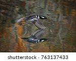 beautiful hooded merganser... | Shutterstock . vector #763137433