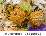 pincushion flower  3 | Shutterstock . vector #763185523
