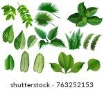 summer  spring leaves set.... | Shutterstock .eps vector #763252153