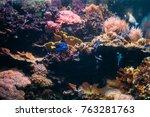 Small photo of Blue Tang Fish Paracanthurus Hepatus And Chromis Viridis Swimming In Water.
