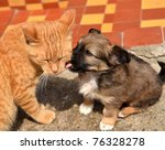 Stock photo dog playing with cat 76328278