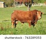 260 5000 the red bull breeding...   Shutterstock . vector #763289353