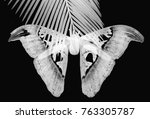 beautiful big butterfly  giant... | Shutterstock . vector #763305787