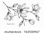 magnolia flower drawing and... | Shutterstock .eps vector #763530967