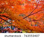 red maple leaves in autumn in... | Shutterstock . vector #763553407