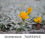 yellow flower and green leave... | Shutterstock . vector #763553413