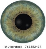 vector realistic human eye iris.... | Shutterstock .eps vector #763553437