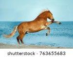 haflinger horse rearing up in... | Shutterstock . vector #763655683