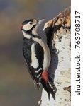 the woodpecker  dendrocopos... | Shutterstock . vector #763708717
