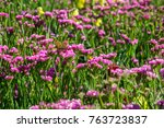 field of pink flowers with... | Shutterstock . vector #763723837