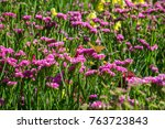 field of pink flowers with... | Shutterstock . vector #763723843