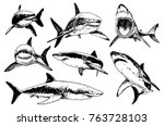 graphical set of sharks... | Shutterstock .eps vector #763728103
