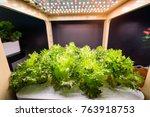 organic hydroponic vegetable... | Shutterstock . vector #763918753