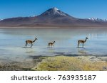 a family of vicuna walk through ... | Shutterstock . vector #763935187