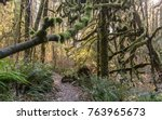 Small photo of mosey forest path